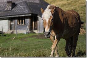 Rencontres avec quelques chevaux à Le Berry
